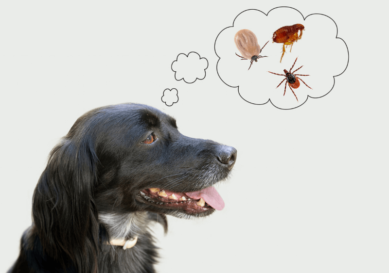 heartworms fleas and ticks